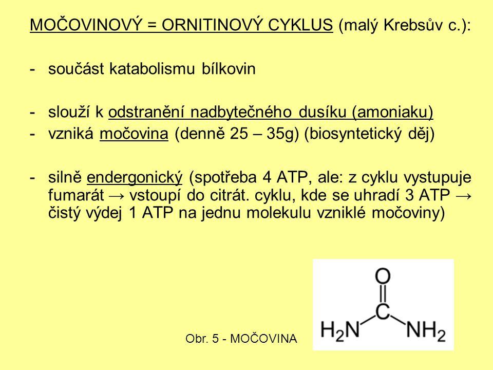 MOČOVINOVÝ = ORNITINOVÝ CYKLUS (malý Krebsův c.): -součást katabolismu bílkovin -slouží k odstranění nadbytečného dusíku (amoniaku) -vzniká močovina (denně 25 – 35g) (biosyntetický děj) -silně endergonický (spotřeba 4 ATP, ale: z cyklu vystupuje fumarát → vstoupí do citrát.