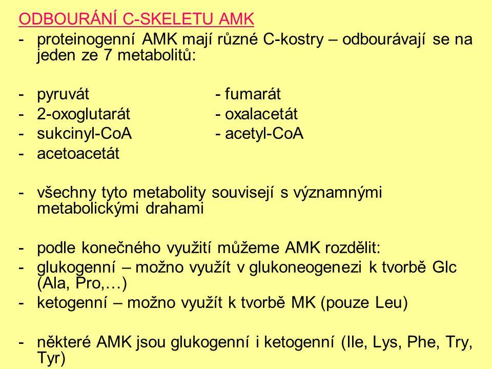ODBOURÁNÍ C-SKELETU AMK -proteinogenní AMK mají různé C-kostry – odbourávají se na jeden ze 7 metabolitů: -pyruvát- fumarát -2-oxoglutarát- oxalacetát -sukcinyl-CoA- acetyl-CoA -acetoacetát -všechny tyto metabolity souvisejí s významnými metabolickými drahami -podle konečného využití můžeme AMK rozdělit: -glukogenní – možno využít v glukoneogenezi k tvorbě Glc (Ala, Pro,…) -ketogenní – možno využít k tvorbě MK (pouze Leu) -některé AMK jsou glukogenní i ketogenní (Ile, Lys, Phe, Try, Tyr)