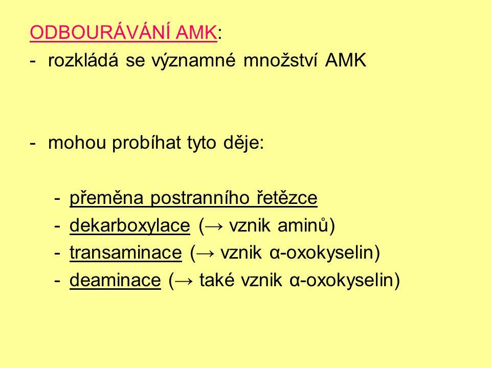 ODBOURÁVÁNÍ AMK: -rozkládá se významné množství AMK -mohou probíhat tyto děje: -přeměna postranního řetězce -dekarboxylace (→ vznik aminů) -transaminace (→ vznik α-oxokyselin) -deaminace (→ také vznik α-oxokyselin)