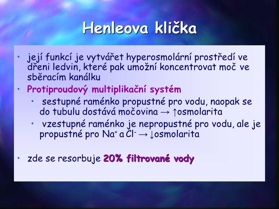 Henleova klička její funkcí je vytvářet hyperosmolární prostředí ve dřeni ledvin, které pak umožní koncentrovat moč ve sběracím kanálku Protiproudový multiplikační systém sestupné raménko propustné pro vodu, naopak se do tubulu dostává močovina → ↑ osmolarita vzestupné raménko je nepropustné pro vodu, ale je propustné pro Na + a Cl - → ↓ osmolarita 20% filtrované vodyzde se resorbuje 20% filtrované vody