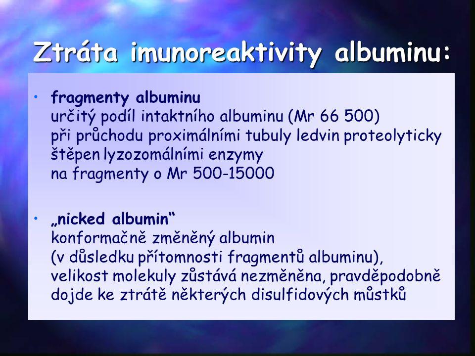 Ztráta imunoreaktivity albuminu: fragmenty albuminu určitý podíl intaktního albuminu (Mr 66 500) při průchodu proximálními tubuly ledvin proteolyticky
