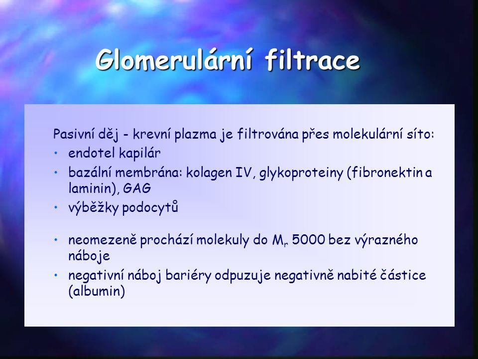 Glomerulární filtrace Pasivní děj - krevní plazma je filtrována přes molekulární síto: endotel kapilár bazální membrána: kolagen IV, glykoproteiny (fibronektin a laminin), GAG výběžky podocytů neomezeně prochází molekuly do M r 5000 bez výrazného náboje negativní náboj bariéry odpuzuje negativně nabité částice (albumin)