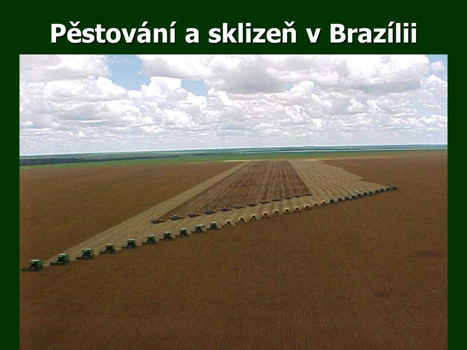 Pěstování a sklizeň v Brazílii
