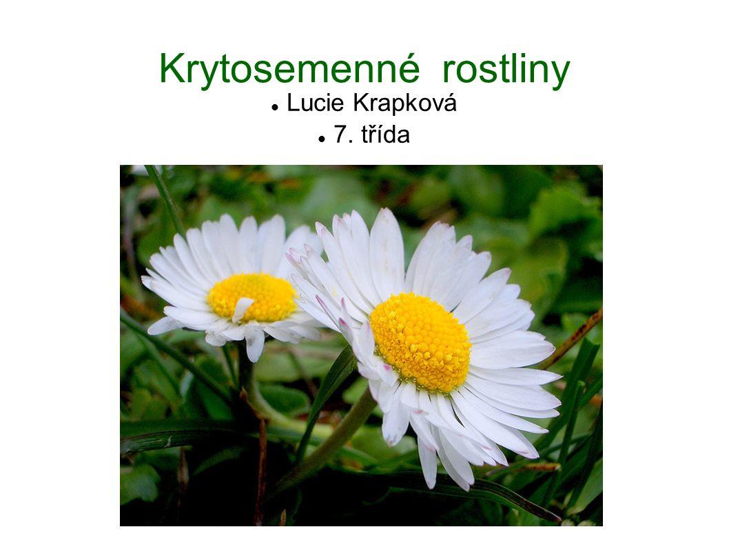 Krytosemenné rostliny Lucie Krapková 7. třída