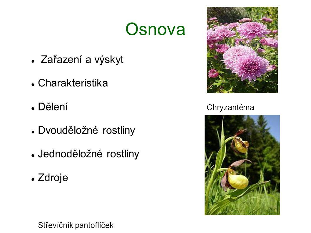Osnova Zařazení a výskyt Charakteristika Dělení Chryzantéma Dvouděložné rostliny Jednoděložné rostliny Zdroje Střevíčník pantoflíček