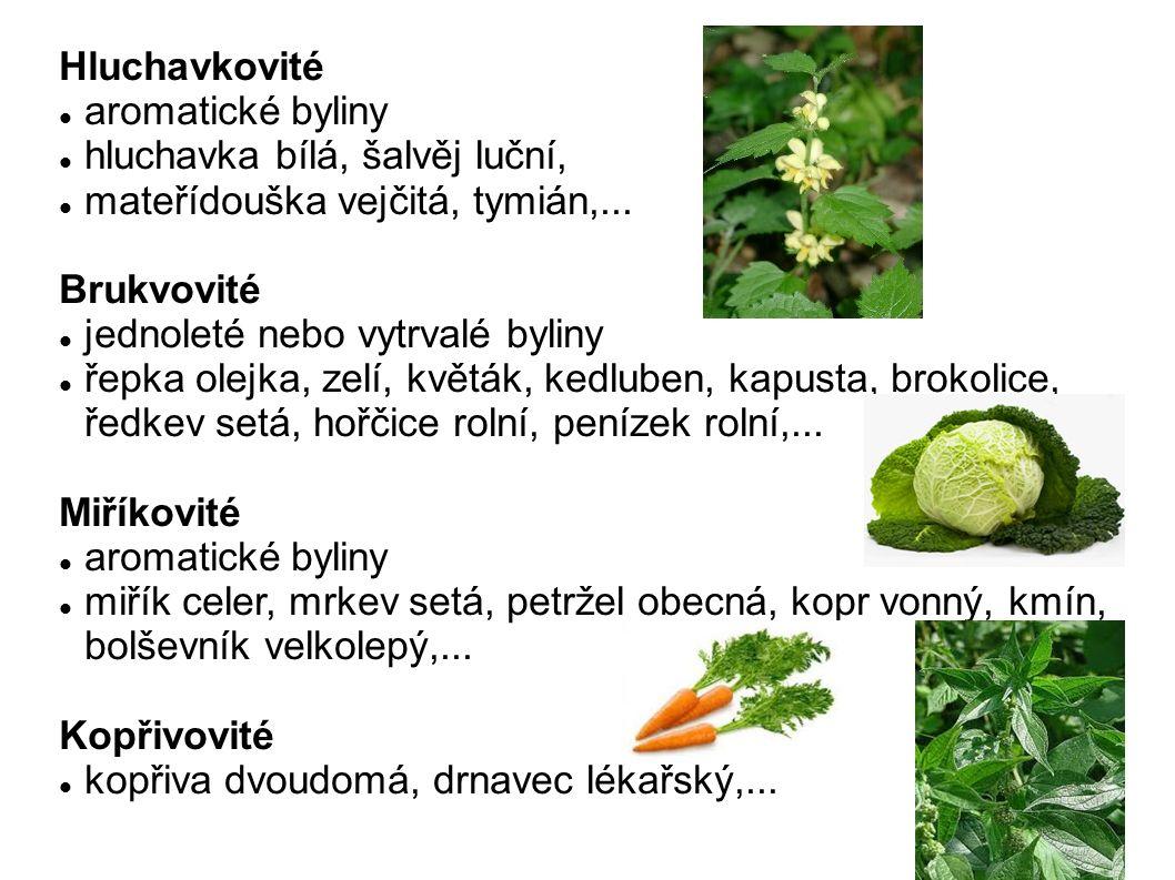 Hluchavkovité aromatické byliny hluchavka bílá, šalvěj luční, mateřídouška vejčitá, tymián,... Brukvovité jednoleté nebo vytrvalé byliny řepka olejka,
