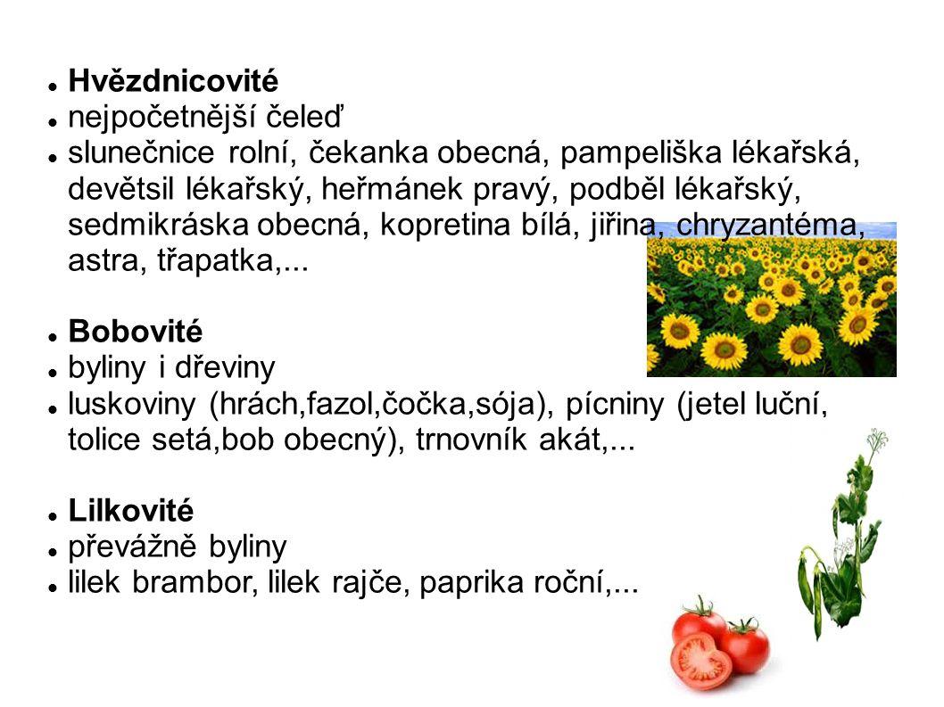 Hvězdnicovité nejpočetnější čeleď slunečnice rolní, čekanka obecná, pampeliška lékařská, devětsil lékařský, heřmánek pravý, podběl lékařský, sedmikrás