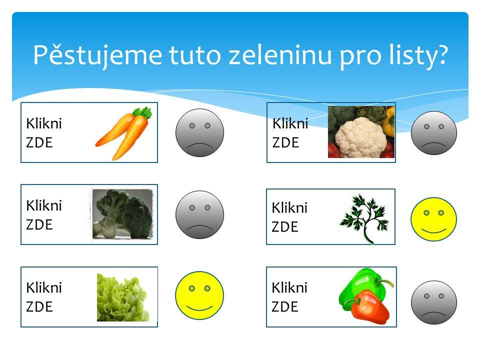 Pěstujeme tuto zeleninu pro listy.