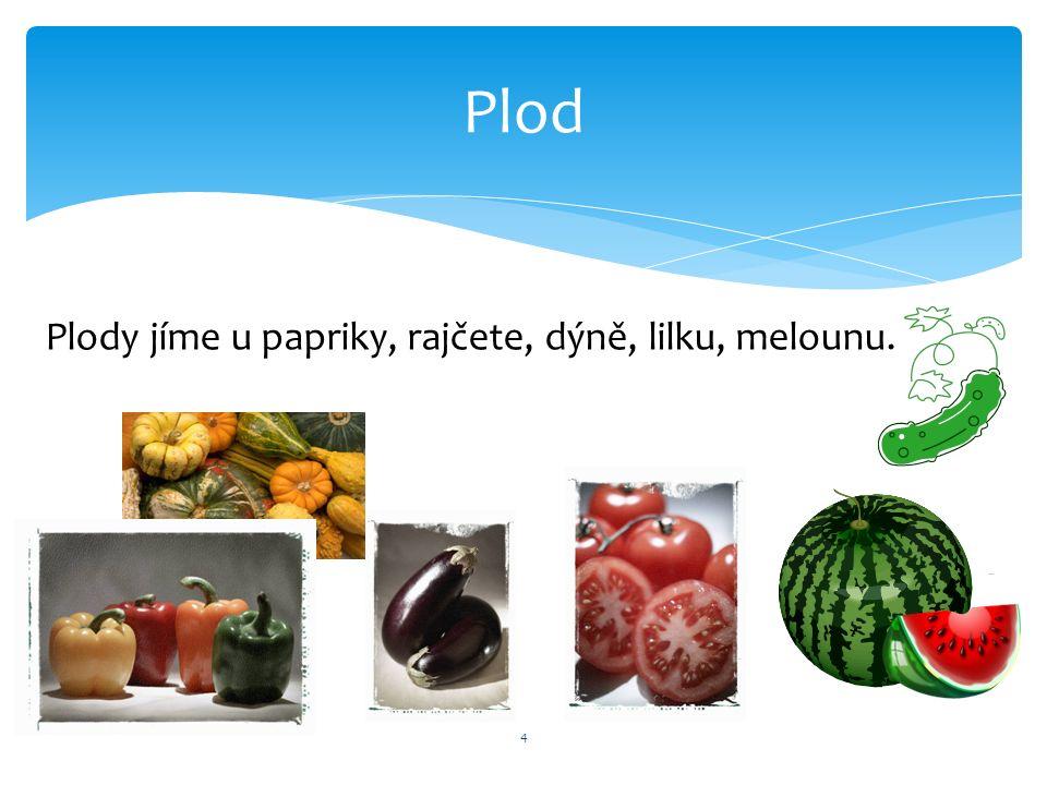 Plod 4 Plody jíme u papriky, rajčete, dýně, lilku, melounu.