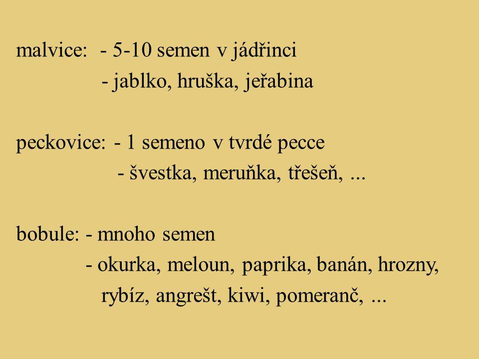 Význam semen a plodů pro člověka Uveď alespoň 3 příklady.