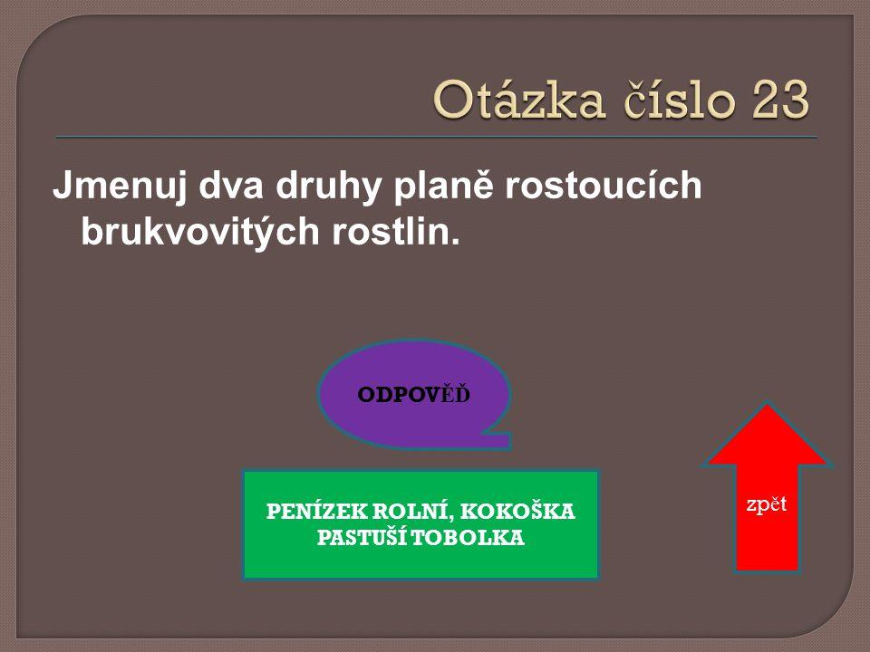 Jmenuj pět druhů hvězdnicovitých rostlin. ODPOV ĚĎ zp ě t KOPRETINA BÍLÁ, Č EKANKA OBECNÁ, SEDMIKRÁSKA CHUDOBKA, SLUNE Č NICE RO Č NÍ, PAMPELIŠKA LÉKA