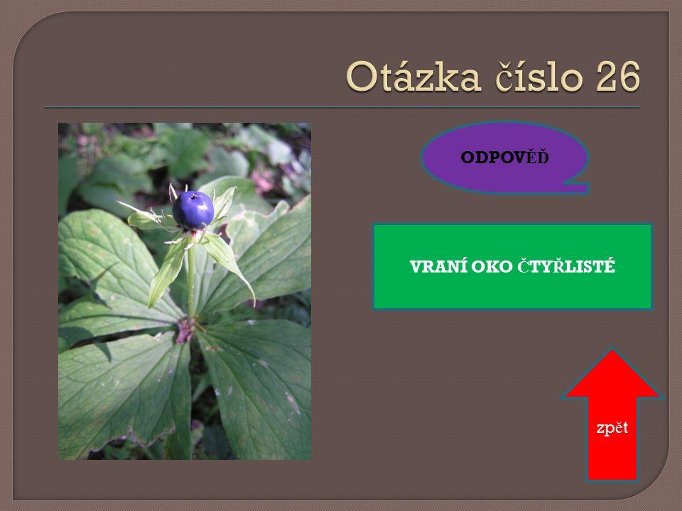 Jmenuj dva druhy okrasných liliovitých rostlin. ODPOV ĚĎ zp ě t LILIE, TULIPÁN