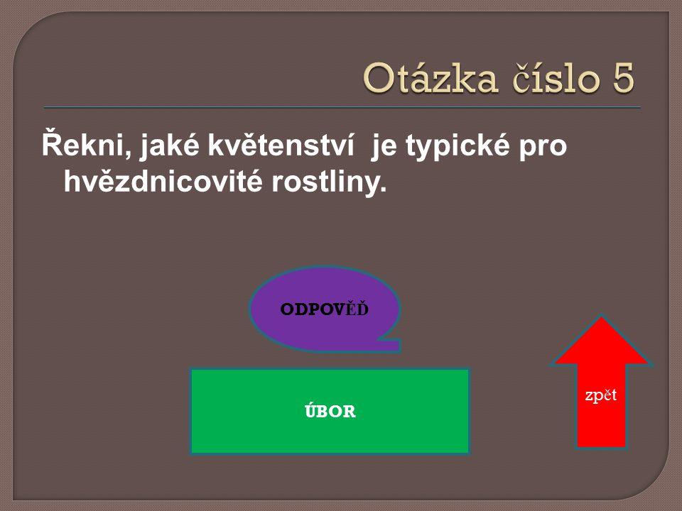 ODPOV ĚĎ JE Č MEN zp ě t