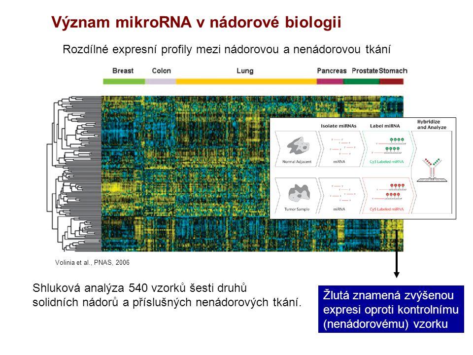 Význam mikroRNA v nádorové biologii Rozdílné expresní profily mezi nádorovou a nenádorovou tkání Volinia et al., PNAS, 2006 Shluková analýza 540 vzorků šesti druhů solidních nádorů a příslušných nenádorových tkání.
