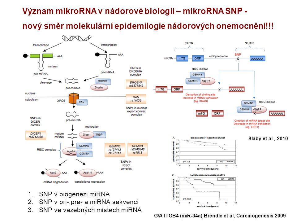 Význam mikroRNA v nádorové biologii – mikroRNA SNP - nový směr molekulární epidemilogie nádorových onemocnění!!.