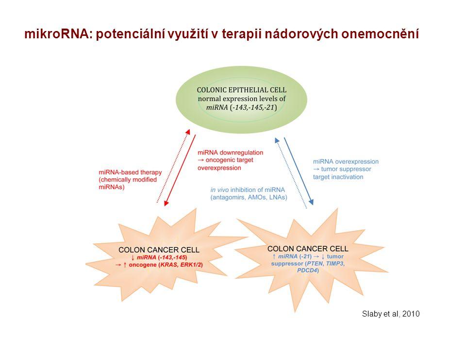 mikroRNA: potenciální využití v terapii nádorových onemocnění Slaby et al, 2010