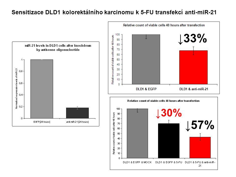 Sensitizace DLD1 kolorektálního karcinomu k 5-FU transfekcí anti-miR-21 ↓33% ↓30% ↓57%