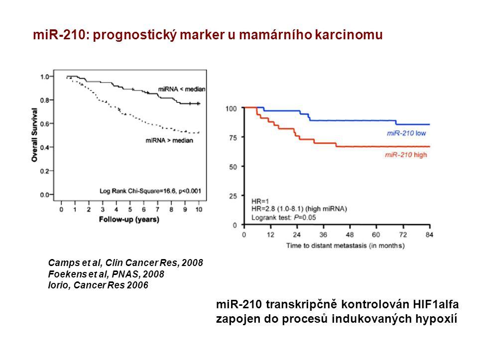 Camps et al, Clin Cancer Res, 2008 Foekens et al, PNAS, 2008 Iorio, Cancer Res 2006 miR-210: prognostický marker u mamárního karcinomu miR-210 transkripčně kontrolován HIF1alfa zapojen do procesů indukovaných hypoxií