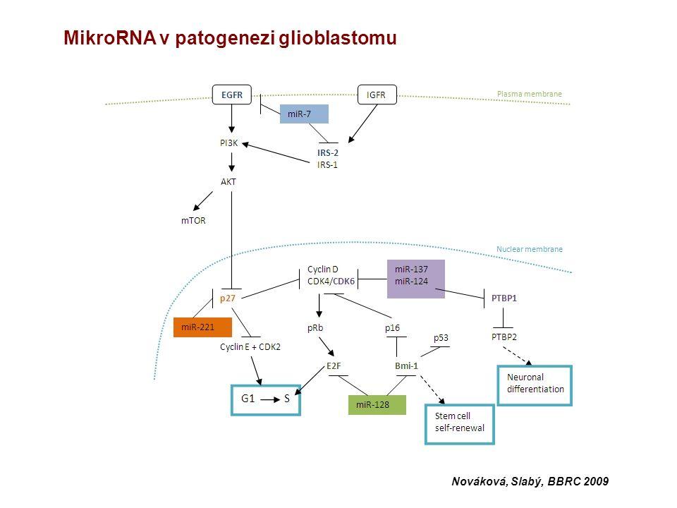 Nováková, Slabý, BBRC 2009 MikroRNA v patogenezi glioblastomu