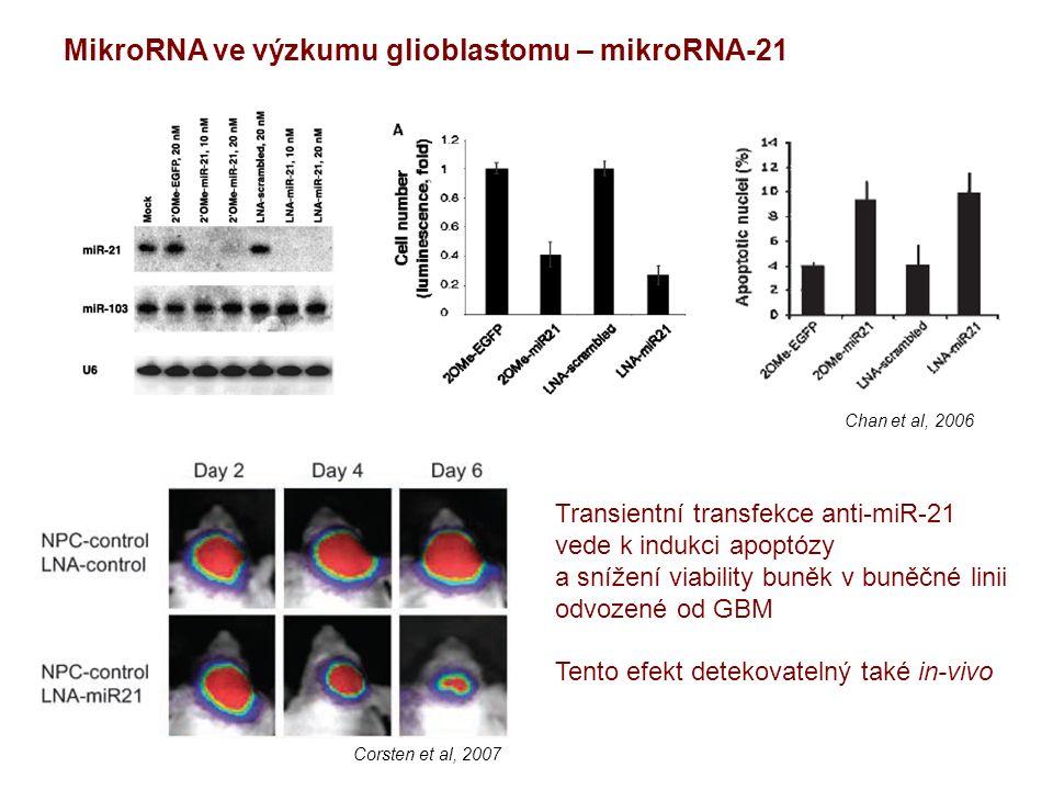 MikroRNA ve výzkumu glioblastomu – mikroRNA-21 Transientní transfekce anti-miR-21 vede k indukci apoptózy a snížení viability buněk v buněčné linii odvozené od GBM Tento efekt detekovatelný také in-vivo Corsten et al, 2007 Chan et al, 2006