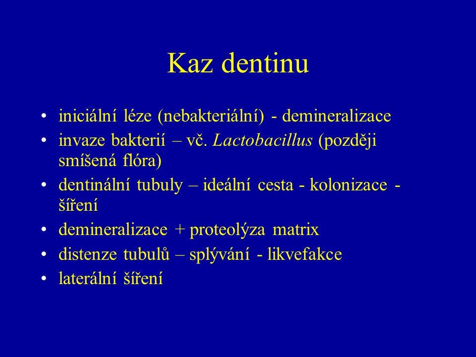 Kaz dentinu iniciální léze (nebakteriální) - demineralizace invaze bakterií – vč. Lactobacillus (později smíšená flóra) dentinální tubuly – ideální ce