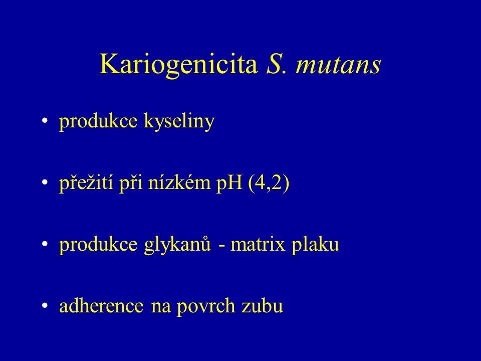 Kariogenicita S. mutans produkce kyseliny přežití při nízkém pH (4,2) produkce glykanů - matrix plaku adherence na povrch zubu
