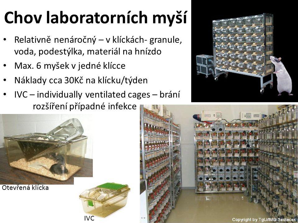 Chov laboratorních myší Relativně nenáročný – v klíckách- granule, voda, podestýlka, materiál na hnízdo Max.