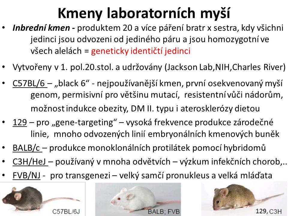 Kmeny laboratorních myší Inbrední kmen - produktem 20 a více páření bratr x sestra, kdy všichni jedinci jsou odvozeni od jediného páru a jsou homozygotní ve všech alelách = geneticky identičtí jedinci Vytvořeny v 1.