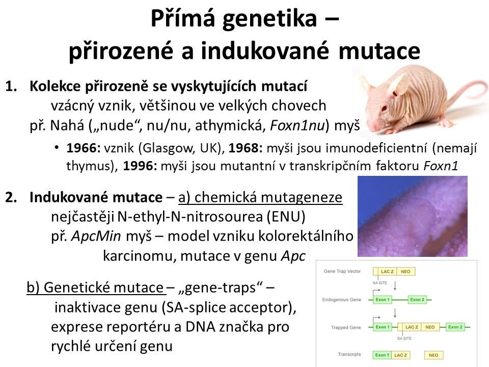 Přímá genetika – přirozené a indukované mutace 1.Kolekce přirozeně se vyskytujících mutací vzácný vznik, většinou ve velkých chovech př.