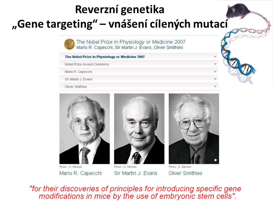 """Reverzní genetika """"Gene targeting – vnášení cílených mutací"""