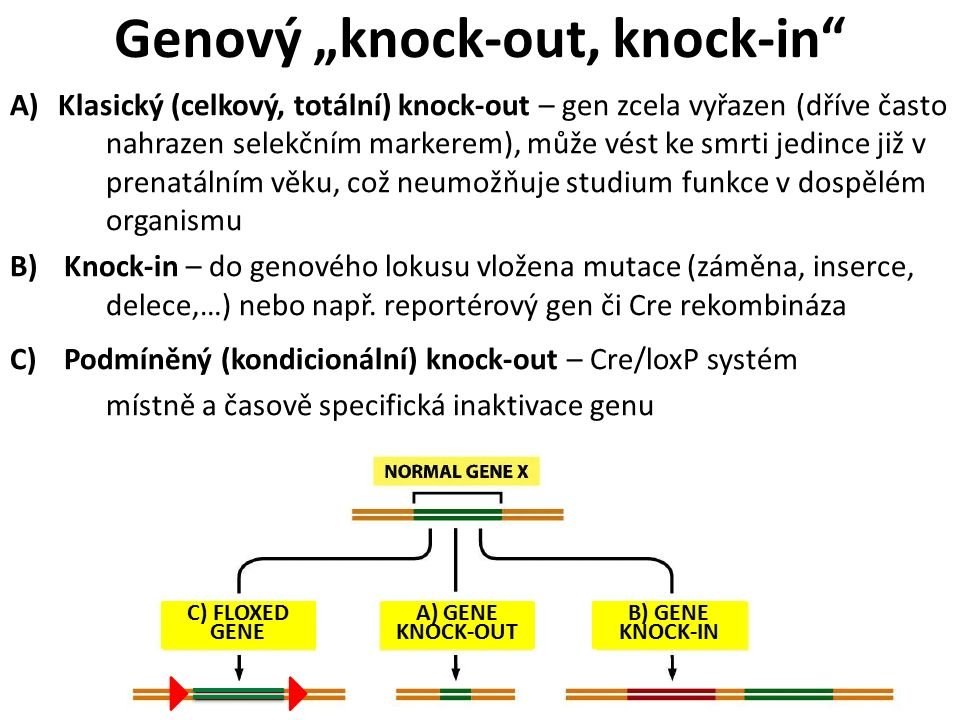 A)Klasický (celkový, totální) knock-out – gen zcela vyřazen (dříve často nahrazen selekčním markerem), může vést ke smrti jedince již v prenatálním věku, což neumožňuje studium funkce v dospělém organismu B)Knock-in – do genového lokusu vložena mutace (záměna, inserce, delece,…) nebo např.