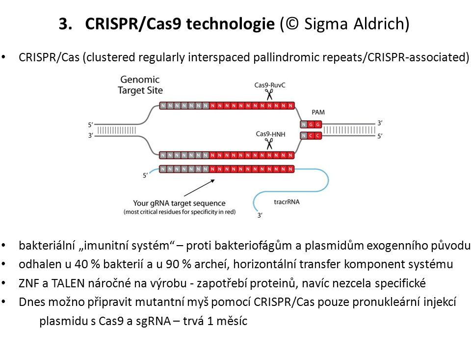 """CRISPR/Cas (clustered regularly interspaced pallindromic repeats/CRISPR ‑ associated) bakteriální """"imunitní systém – proti bakteriofágům a plasmidům exogenního původu odhalen u 40 % bakterií a u 90 % archeí, horizontální transfer komponent systému ZNF a TALEN náročné na výrobu - zapotřebí proteinů, navíc nezcela specifické Dnes možno připravit mutantní myš pomocí CRISPR/Cas pouze pronukleární injekcí plasmidu s Cas9 a sgRNA – trvá 1 měsíc 3.CRISPR/Cas9 technologie (© Sigma Aldrich)"""