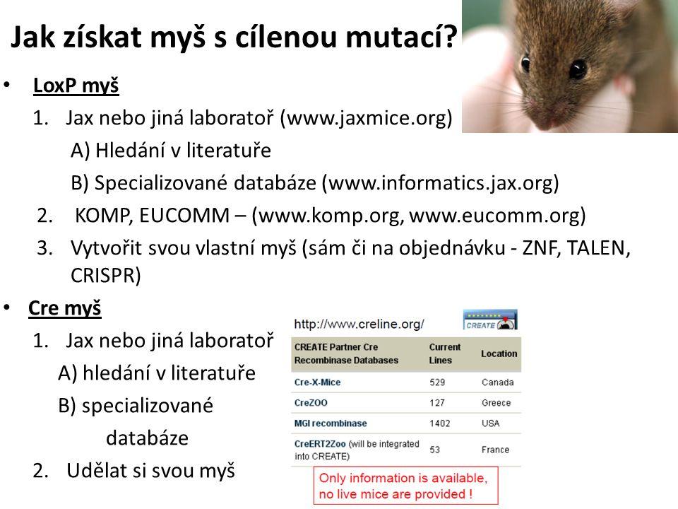 Jak získat myš s cílenou mutací.