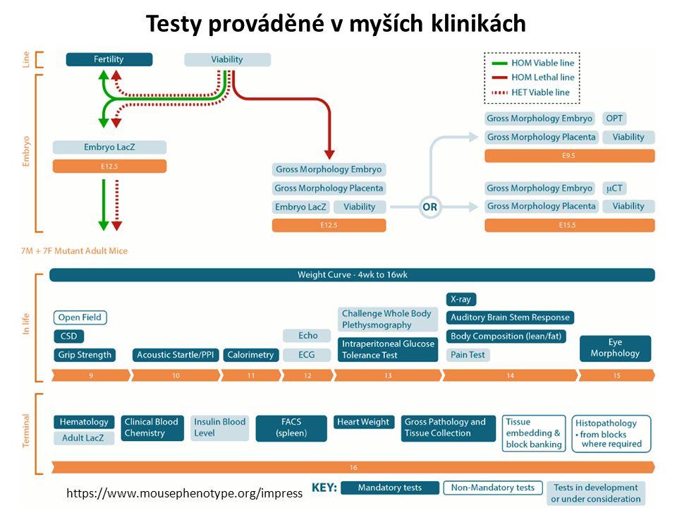 Testy prováděné v myších klinikách https://www.mousephenotype.org/impress