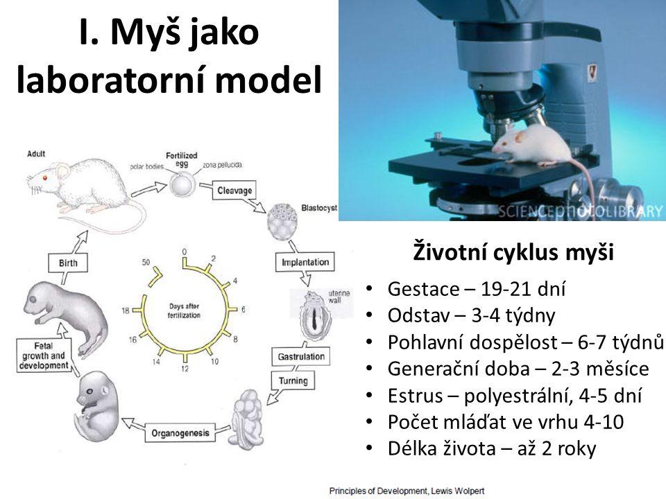 I. Myš jako laboratorní model Životní cyklus myši Gestace – 19-21 dní Odstav – 3-4 týdny Pohlavní dospělost – 6-7 týdnů Generační doba – 2-3 měsíce Es