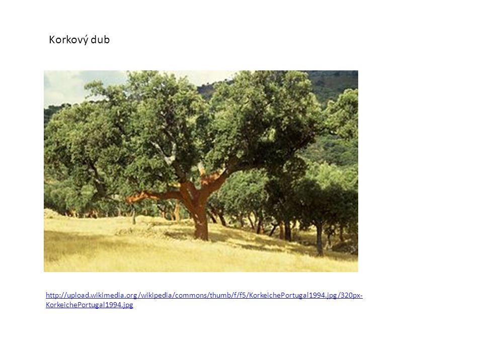 Korkový dub http://upload.wikimedia.org/wikipedia/commons/thumb/f/f5/KorkeichePortugal1994.jpg/320px- KorkeichePortugal1994.jpg