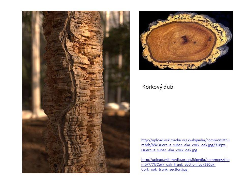 http://upload.wikimedia.org/wikipedia/commons/thu mb/b/b8/Quercus_suber_aka_cork_oak.jpg/318px- Quercus_suber_aka_cork_oak.jpg http://upload.wikimedia