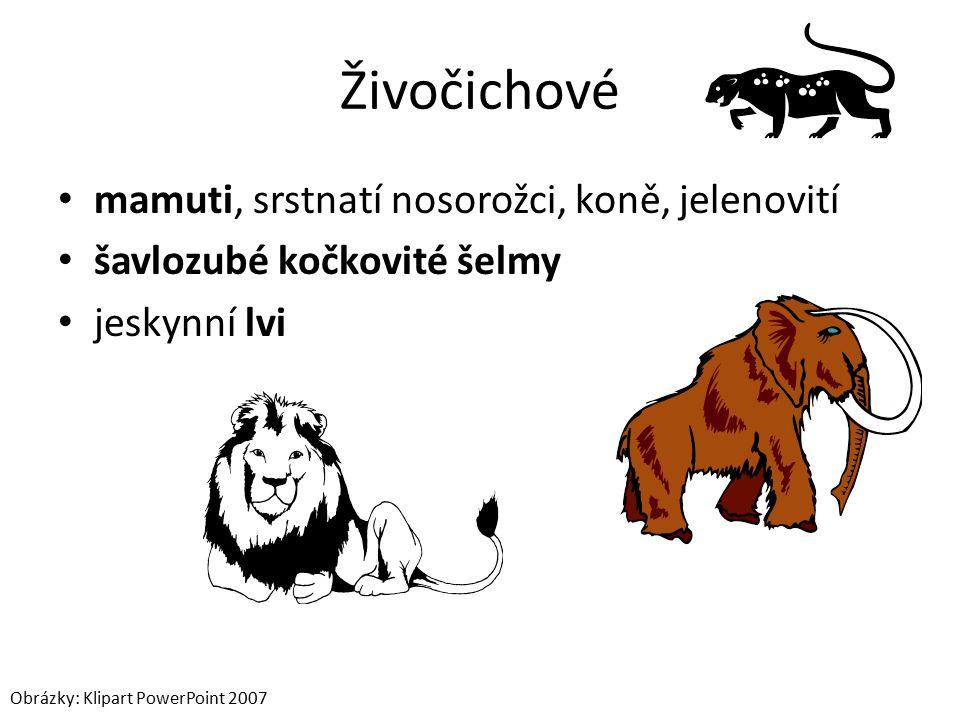 Živočichové mamuti, srstnatí nosorožci, koně, jelenovití šavlozubé kočkovité šelmy jeskynní lvi Obrázky: Klipart PowerPoint 2007