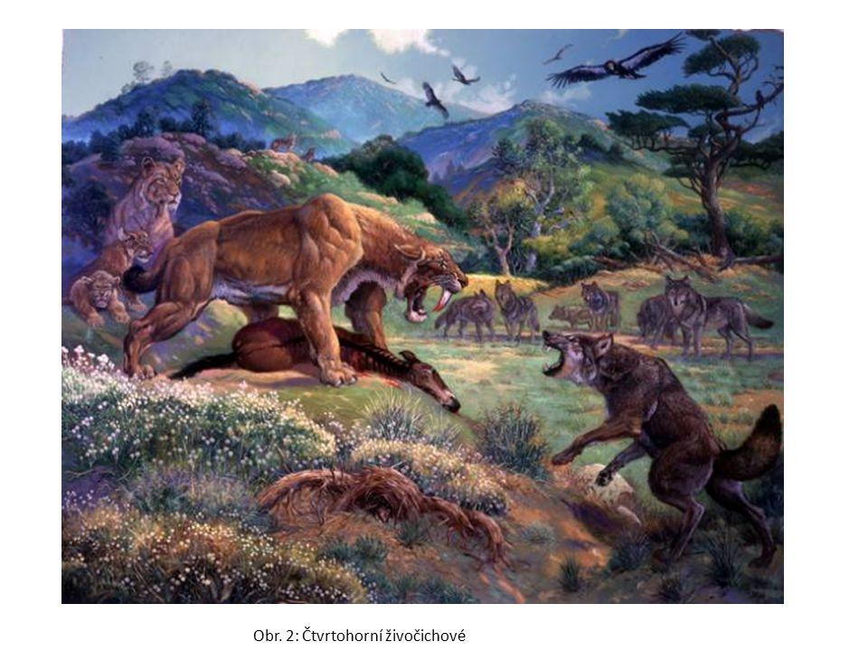 Obr. 2: Čtvrtohorní živočichové