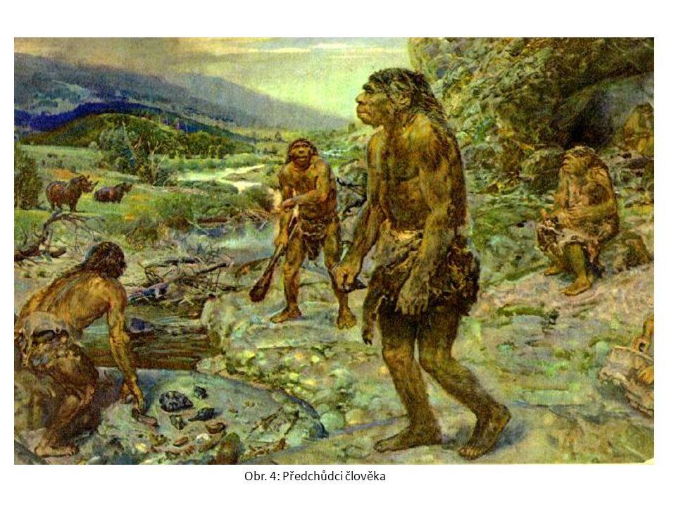 Obr. 4: Předchůdci člověka