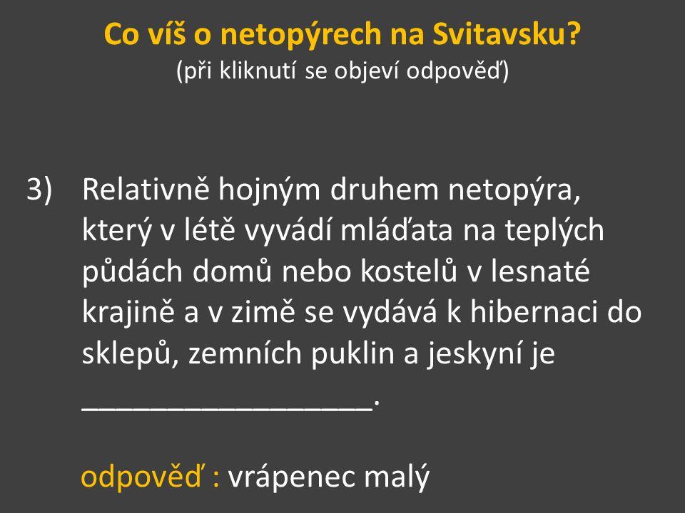 Co víš o netopýrech na Svitavsku.