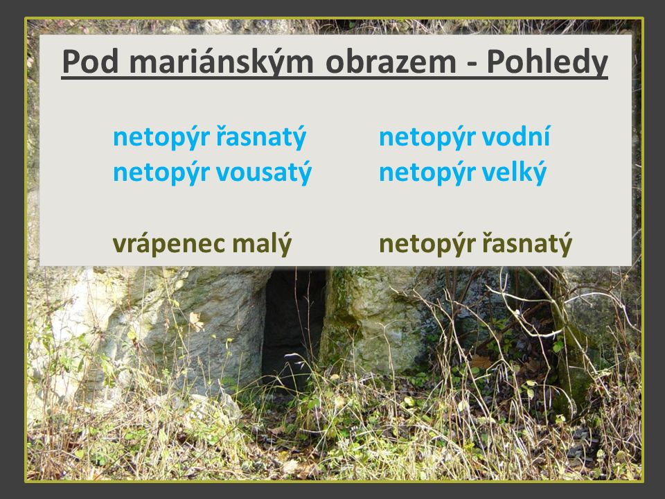 Pod mariánským obrazem - Pohledy netopýr řasnatýnetopýr vodní netopýr vousatýnetopýr velký vrápenec malýnetopýr řasnatý