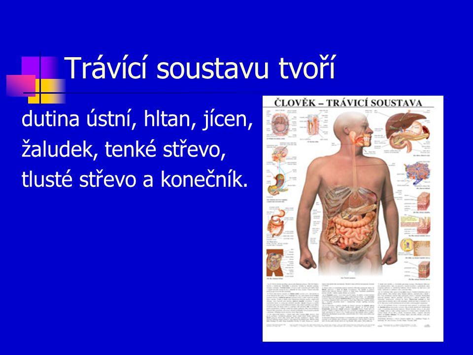 Trávící soustavu tvoří dutina ústní, hltan, jícen, žaludek, tenké střevo, tlusté střevo a konečník.