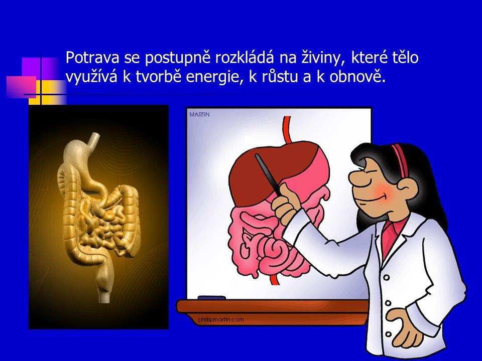Potrava se postupně rozkládá na živiny, které tělo využívá k tvorbě energie, k růstu a k obnově.