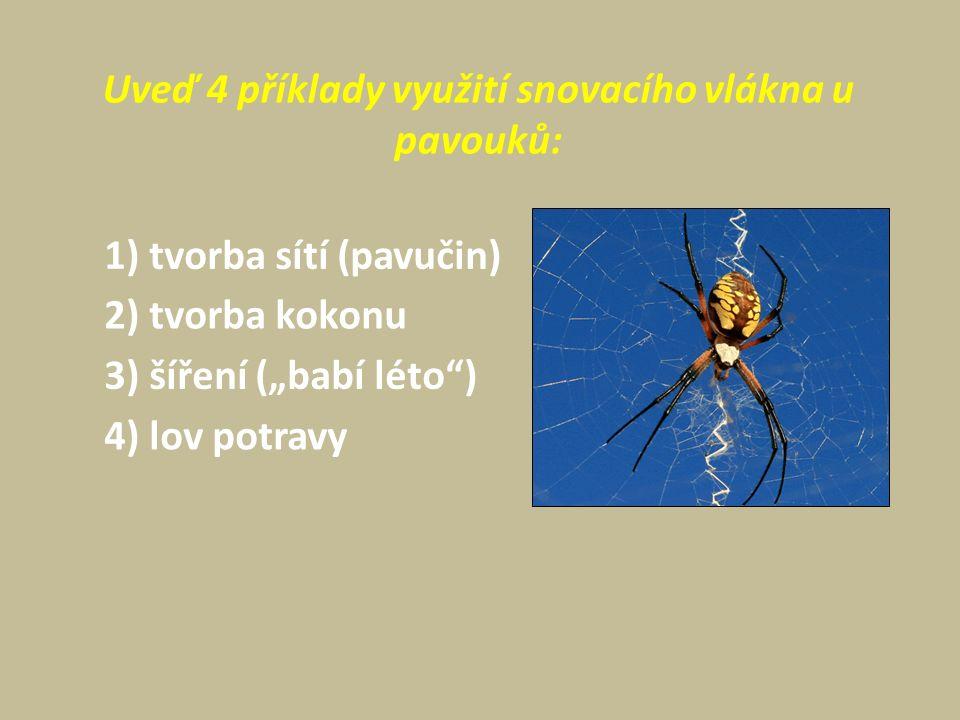 """Uveď 4 příklady využití snovacího vlákna u pavouků: 1) tvorba sítí (pavučin) 2) tvorba kokonu 3) šíření (""""babí léto ) 4) lov potravy"""