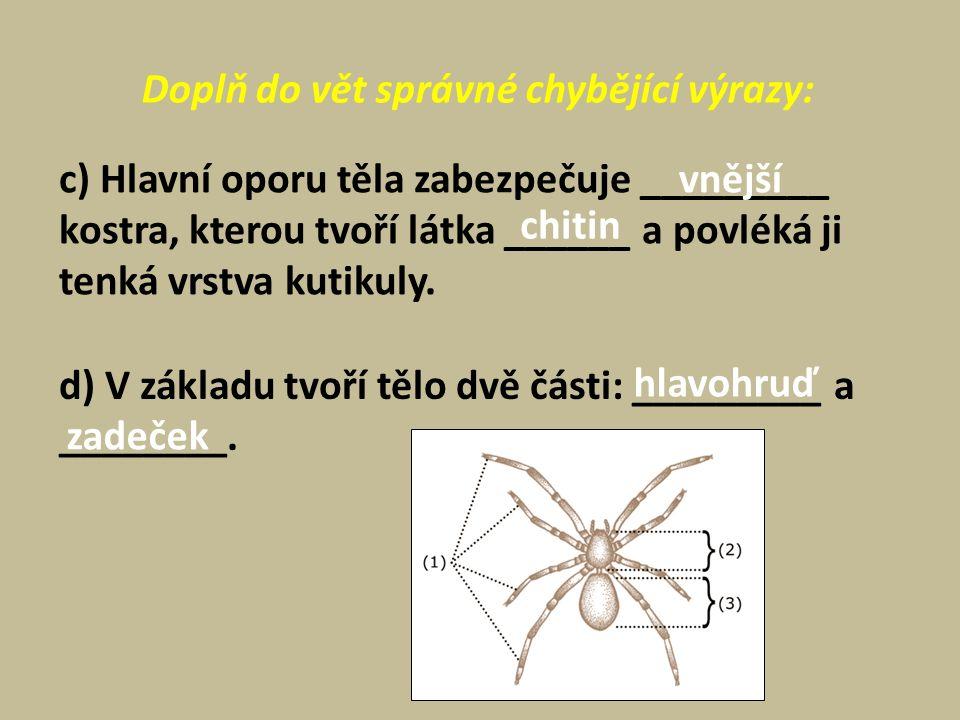 Poznáš druh pavouka? vodouch