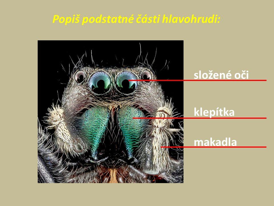 Popiš podstatné části hlavohrudi: složené oči klepítka makadla