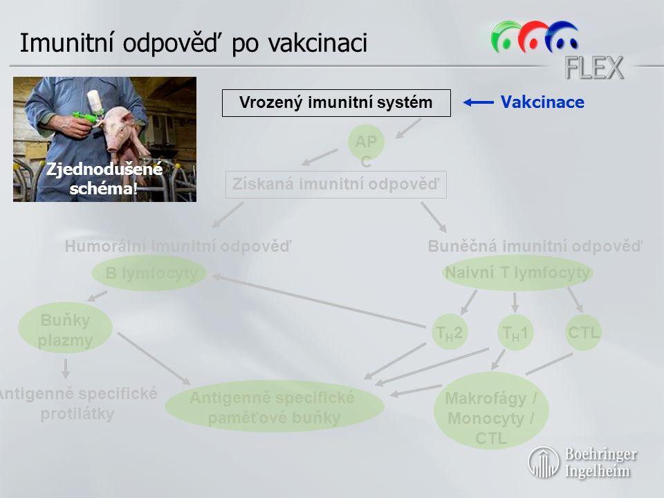 Získaná imunitní odpověď Humorální imunitní odpověďBuněčná imunitní odpověď B lymfocyty Naivní T lymfocyty T H 2T H 1CTL Vrozený imunitní systém AP C Zjednodušené schéma .