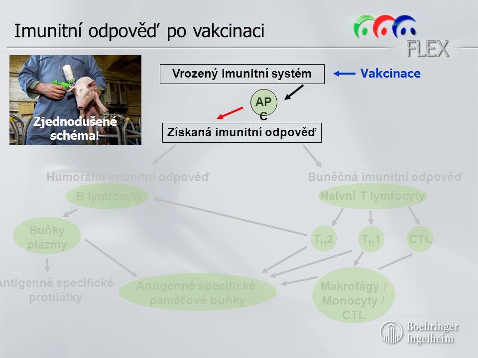 Získaná imunitní odpověď Humorální imunitní odpověďBuněčná imunitní odpověď B lymfocyty Naivní T lymfocyty T H 2T H 1CTL Antigenně specifické paměťové buňky Vrozený imunitní systém Antigenně specifické protilátky AP C Zjednodušené schéma .