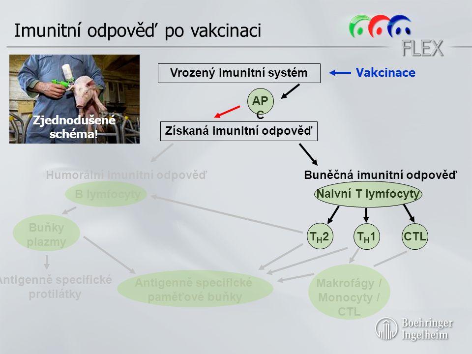 Imunitní odpověď po vakcinaci Získaná imunitní odpověď Humorální imunitní odpověďBuněčná imunitní odpověď B lymfocyty Naivní T lymfocyty T H 2T H 1CTL Vrozený imunitní systém AP C Zjednodušené schéma .